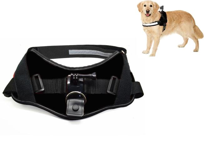 ACTIVEON 360 Dog Vest_with dog