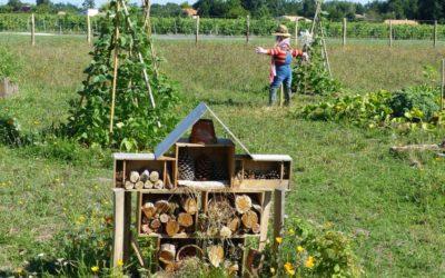 ManoMano.it e il Bosco di Ogigia: i consigli per una vita più eco-friendly